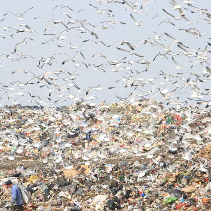 Сортировка отходов — психотерапия для бедных
