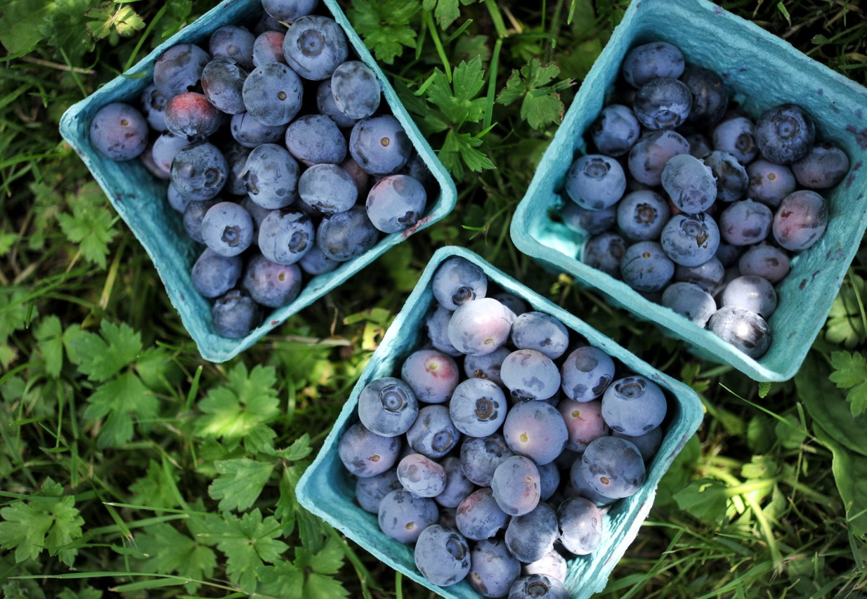 It's officially raspberry and blueberry season is here at the Cascadian Home Farm!